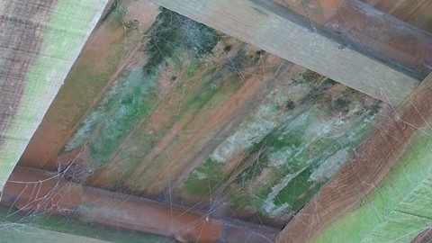 Dampness In Your Home